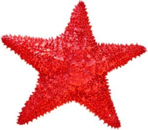 Orange Minion Starfish